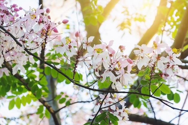 Coloré, arbre, fleur tropicale, thaï