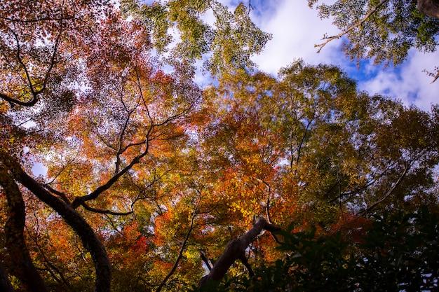 Coloré, automne, osaka, japon
