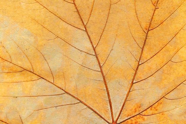 Coloré brillant de feuille d'automne