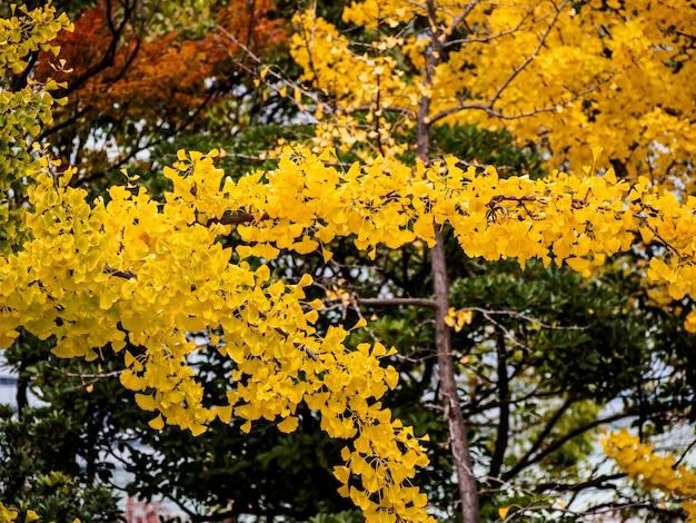 Coloré de feuilles en automne, japon