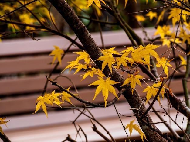 Coloré, feuilles, automne, nikko, japon