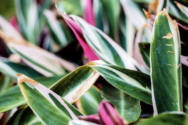 Coloré de feuilles.