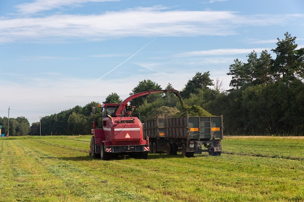 Combinez la récolte d'un champ vert et décharge le blé pour l'ensilage sur un camion à double remorque.
