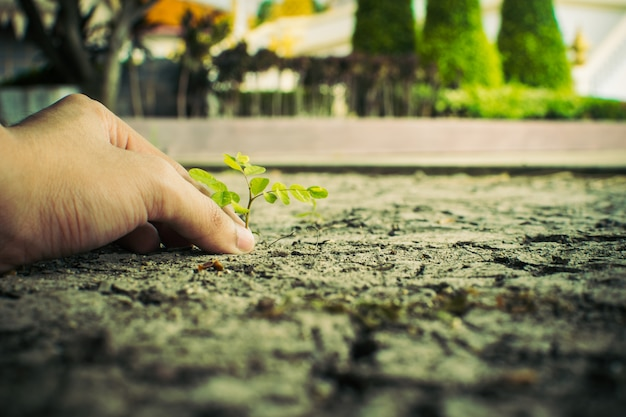 Comment planter la croissance des plants,