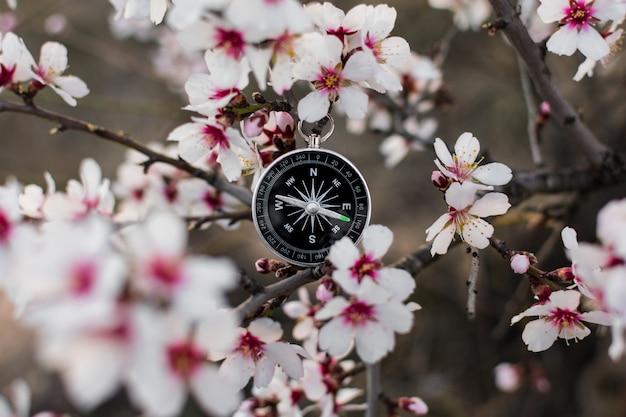 Un compas magnétique dans un arbre en fleurs contre.