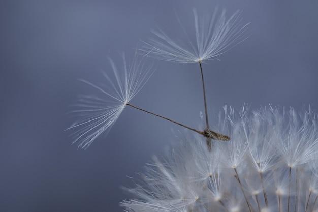 Compatibilité de deux personnes. un symbole de solidarité. graines de pissenlit volantes.