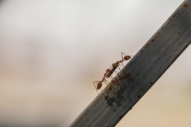 Comportement des fourmis