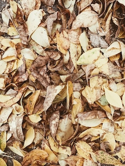 Composition d'automne et d'automne. feuilles colorées orange et jaunes