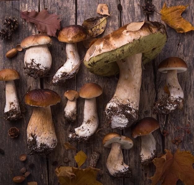 Composition d'automne automne. variété de champignons crus comestibles penny bun boletus leccinum sur une table rustique.