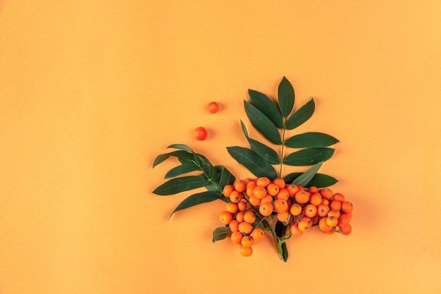 Composition d'automne. cadre de baies de rowan sur fond orange. minimalisme, mise à plat, espace de copie pour le texte.