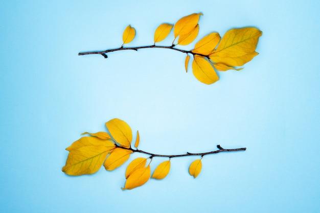 Composition d'automne, cadre de feuilles. deux branches avec des feuilles jaunes, prune, sur un fond bleu clair. pose à plat, vue de dessus, surface