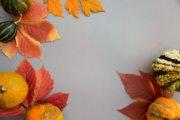 Composition d'automne. citrouilles, feuilles sur fond gris pastel.