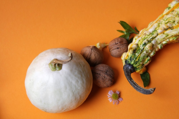 Composition d'automne de citrouilles, noix, feuilles vertes et une fleur