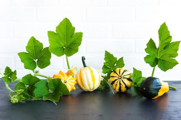 Composition d'automne de différentes citrouilles décoratives sur fond noir en face d'un mur de briques blanches.