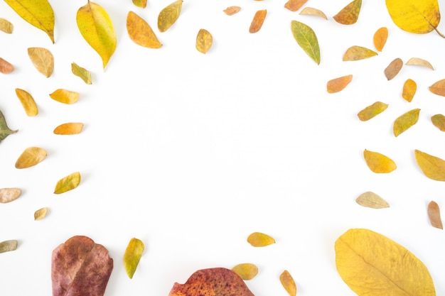 Composition d'automne. espace de copie pour la saison d'automne.