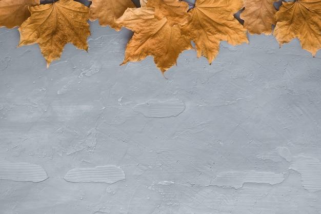 Composition d'automne faite de feuilles d'érable colorées sur fond de béton foncé