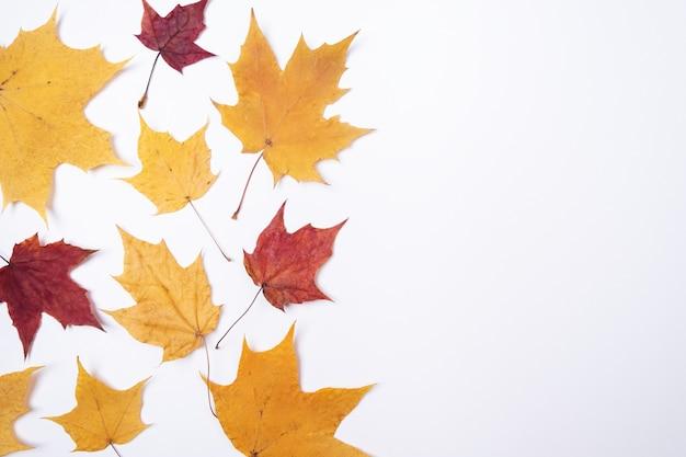 Composition d'automne feuilles d'automne sèches sur fond blanc concept de retour à l'école thème de l'école de saison bannière horizontale mise à plat, vue de dessus, espace de copie