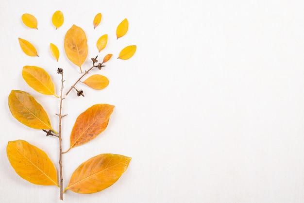 Composition d'automne. feuilles jaunes tombées et branches sur fond blanc.