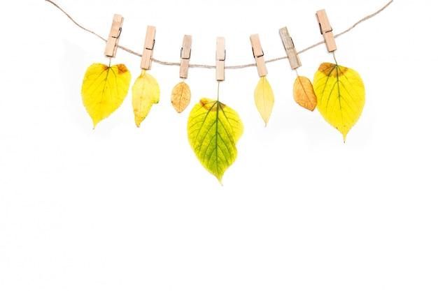 Composition d'automne. fleurs d'automne et feuilles sur la corde isolé sur blanc