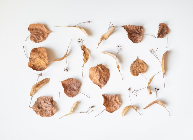 Composition d'automne. fleurs et feuilles de tilleul séchées sur fond blanc. automne, automne, concept de jour de thanksgiving. mise à plat, vue de dessus, espace copie