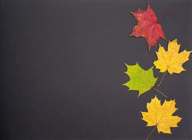 Composition d'automne. motif de feuilles d'érable séchées rouges et jaunes sur fond noir. pose à plat, vue de dessus, surface.