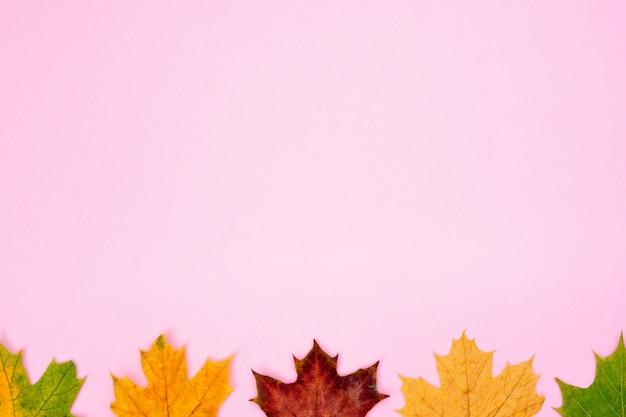Composition d'automne. motif de feuilles d'érable séchées rouges et jaunes sur un rose tendre