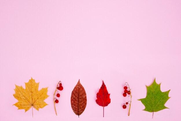 Composition d'automne. motif de feuilles sèches rouges, jaunes, vertes et de baies rouges sur une branche sur un rose tendre