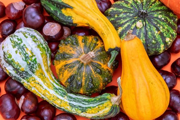 Composition d'automne à plat de citrouilles décoratives et de châtaignes sur fond orange