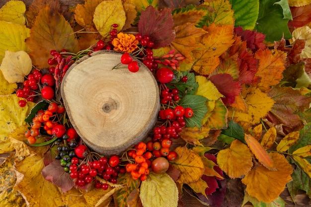 Composition d'automne souche d'arbre sur fond de feuilles d'automne colorées et de baies à plat