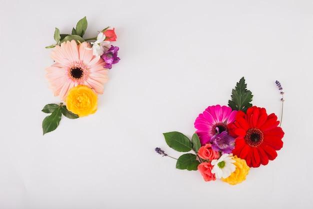 Composition de belle fleur sur blanc
