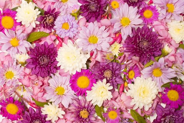 Composition de belles fleurs colorées