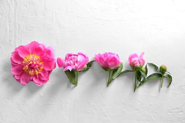 Composition avec de belles fleurs de pivoine sur la lumière
