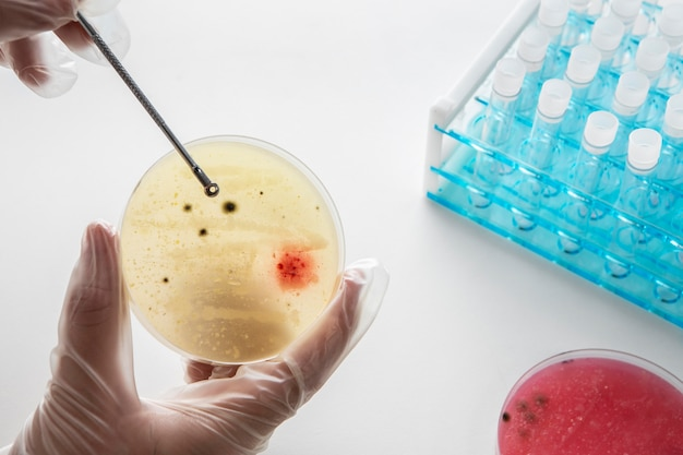 Composition chimique de la journée mondiale des sciences de la nature morte
