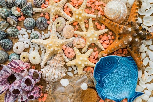Composition colorée avec de jolis éléments marins