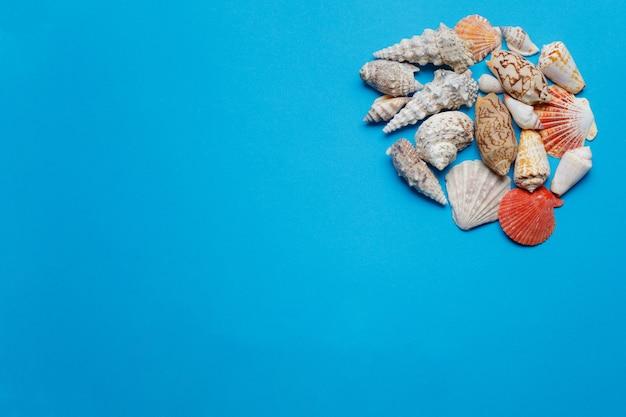 Composition de coquillage océan multicolore mise à plat