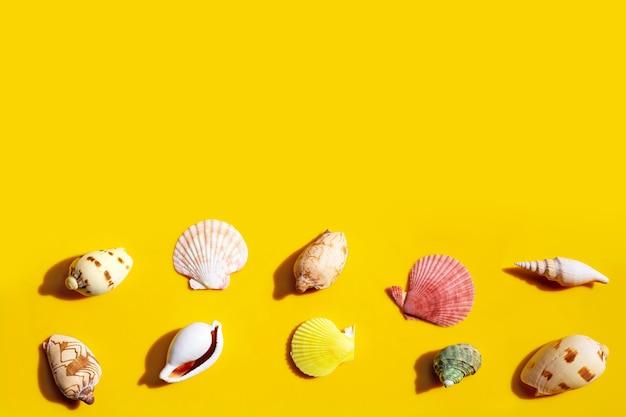 Composition de coquillages exotiques sur fond jaune.