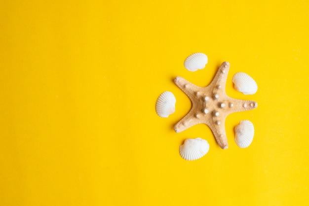 Composition de coquillages exotiques sur fond jaune