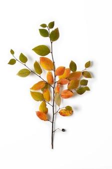 Composition créative d'automne. branche d'arbre et feuilles jaunes sur fond blanc.