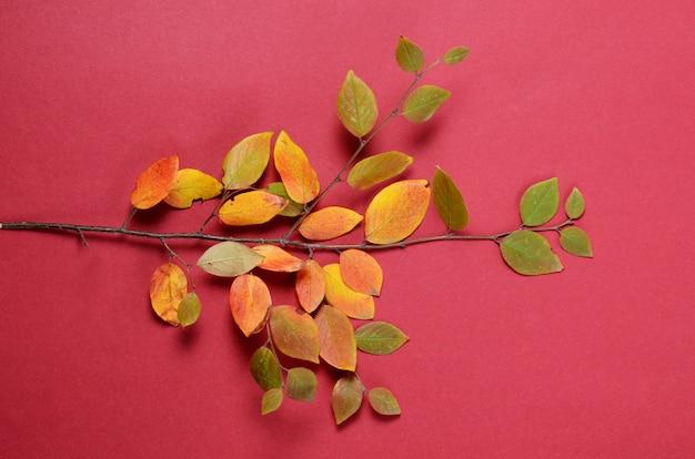 Composition créative d'automne. branche d'arbre et feuilles jaunes sur fond rouge.