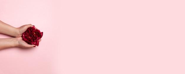 Composition créative minimale des mains féminines avec une belle manucure détient une fleur de pivoine rouge foncé avec fond sur fond rose, vue de dessus, mise à plat. carte de voeux heureuse fête des mères