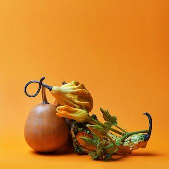 Composition créative d'une tige de citrouille et différentes citrouilles sur fond orange