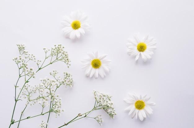 Composition délicate de marguerites et fleurs de souffle de bébé
