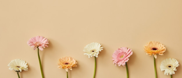 Composition de différentes fleurs de gerbera lumineuses sur fond beige comme carte postale pour la fête des mères ou le 8 mars avec espace de copie