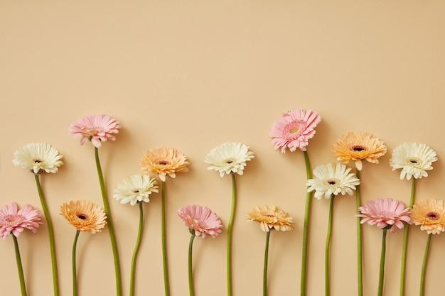 Composition de différents gerberas sur fond de papier jaune. composition de printemps. une carte de voeux pour la fête des mères ou le 8 mars. mise à plat