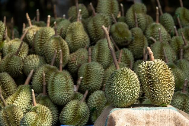 Composition en durian, belles positions dans les vergers de thaïlande.