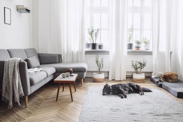 Composition élégante d'un intérieur de salon spacieux et créatif avec canapé, table basse, plantes, tapis, chien et accessoires. murs blancs et sol en parquet.