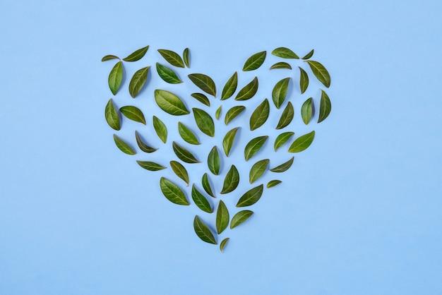 Composition d'été. feuilles vertes disposées en forme de coeur sur fond bleu.