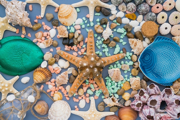 Composition d'été avec une jolie étoile de mer