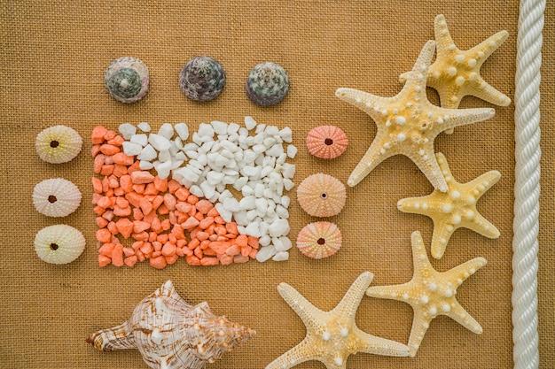 Composition d'été avec les oursins et les étoiles de mer