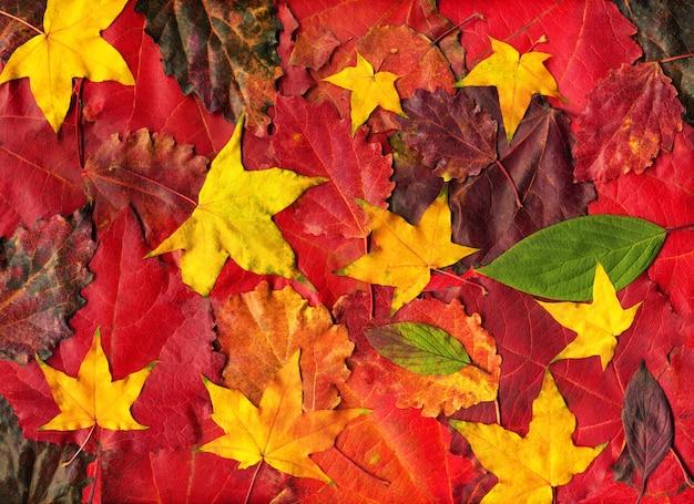 Composition de feuilles d'automne